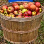 6 мифов об яблочном уксусе