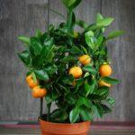 ТОП-10 комнатных растений, которые очистят воздух в доме